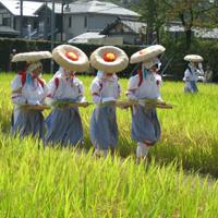 抜穂祭(ぬいぼさい)