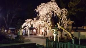 桜4.10③
